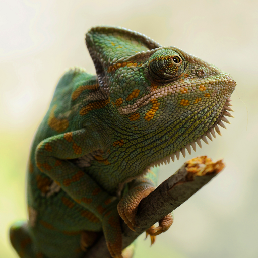 kcms/users/package/contents/img/photos/Chameleon.png